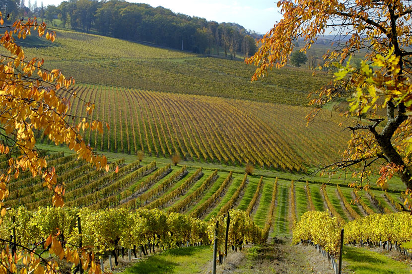 vigne bergerac automne