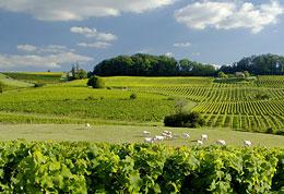 Château Bélingard - Vin de Bergerac et vin de Monbazillac